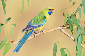 попугай, птица, яркий