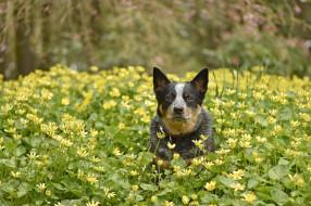 весна, собака