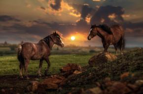 камни, тучи, солнце, свет, пейзаж, небо, закат, облака, пара, холм, кони, два коня, лошади, лето, два