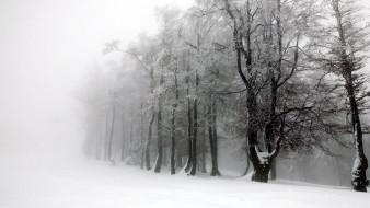 природа, зима, туман