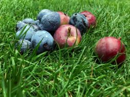 еда, трава, яблоки, слива
