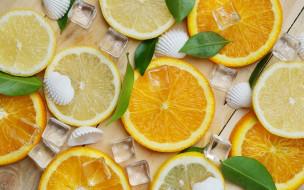 лед, ракушки, лимон, апельсин