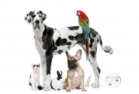рыбки, кролик, попугай, собака, кот, далматинец