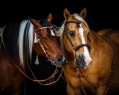 грива, лошади, кони