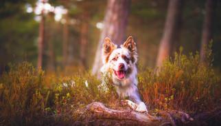 собака, трава, лес