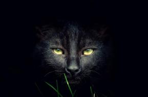 темнота, трава, черный, кот