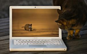 мышь, ноутбук, кот
