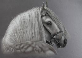 конь, фон