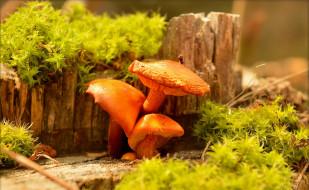 природа, Грибы, Mushrooms