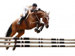 спорт, конный спорт, конь, блондинка, жокей, прыжок, барьер