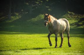 поляна, склон, лошадь