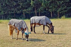 попоны, лес, поляна, лошади