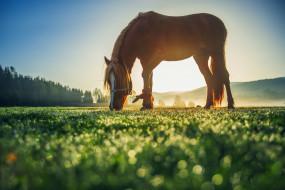 конь, поляна, рассвет, деревья