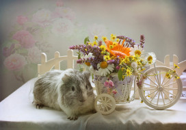 морская свинка, стол, цветы