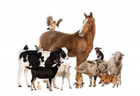 поросята, кролик, козы, куры, свинья, теленок, лошадь, овца