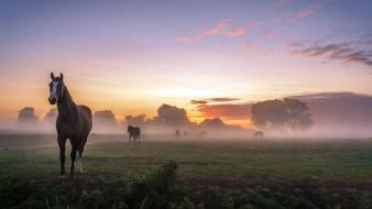 животные, лошади, утро, кони
