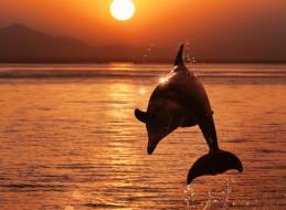 брызги, прыжок, дельфин, море, закат