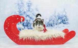 животные, коты, ели, снег, кот, сани, шарф