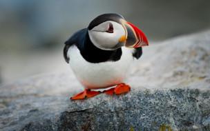 животные, тупики, тупик, камень, птица