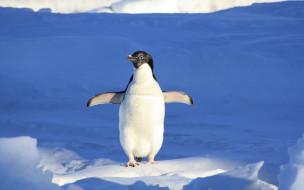 лед, пингвин, снег