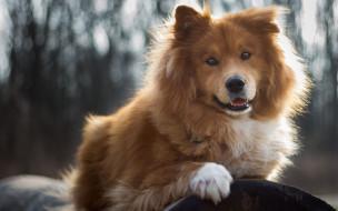 собака, порода, боке, мохнатый, щенок, природа, бревно