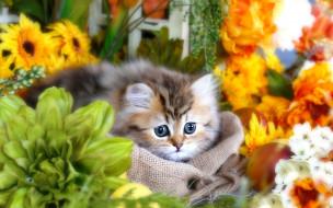 цветы, мешок, котенок