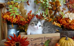 цветы, ящик, осень, котенок, тыква, листья