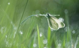 насекомое, стебель, фон, бабочка, белая, свет, трава, макро, боке, блики, зеленый