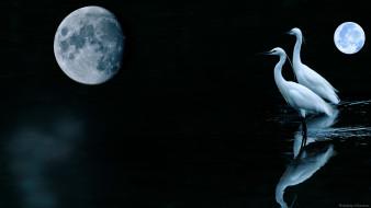 Луна, планета, цапли