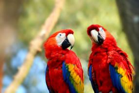 обои для рабочего стола 1920x1280 животные, попугаи, попугай, экзотический, красочный, перо, птица, ара