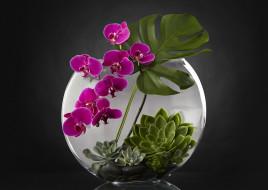 растения, аквариум, орхидея