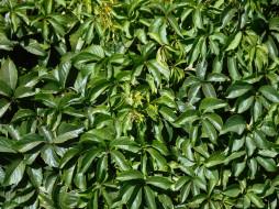 разное, текстура, листья
