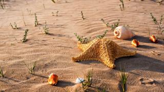 песок, ракушки, звезда