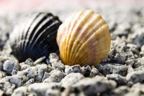 природа, море, ракушки