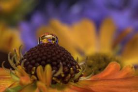 цветок, вода, макро, природа, капля