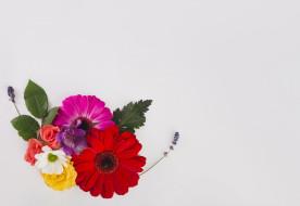 лаванда, листья, розы, герберы