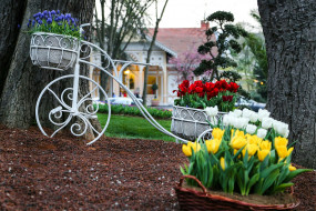 тюльпаны, цветы, клумба, природа