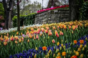 тюльпаны, цветы, разные вместе, боке, природа
