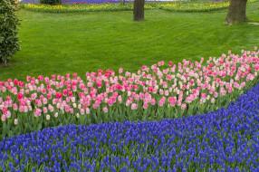 тюльпаны, цветы, разные вместе, клумба, природа