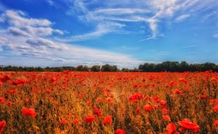 маки, красные, маковое поле, облака, цветы, небо, лето, мак, синева