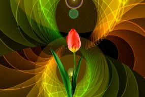 фон, тюльпан