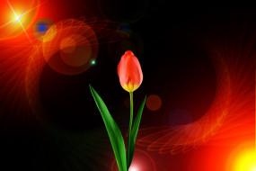 тюльпан, фон
