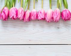 розовый, букет, тюльпаны, фон, цветы
