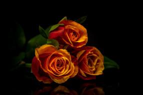 розы, отражение