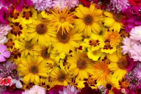 розовый, много, цветы, желтый