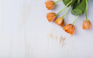 букет, тюльпаны, фон, оранжевый, цветы