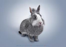 заяц, кролик