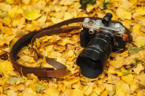 фотоаппарат, листья, осень, Олимпус, камера
