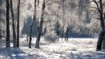 природа, зима, деревья