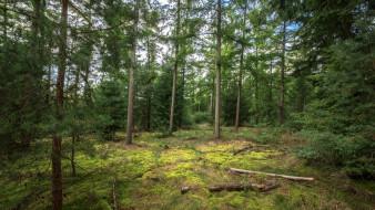 природа, лес, брёвна